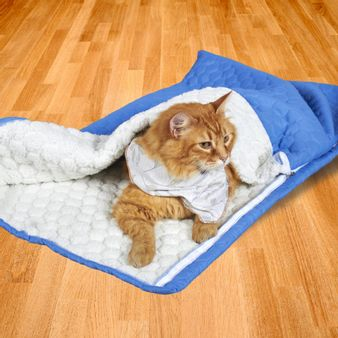 Sleeping-ovejero-para-mascotas-rey-m